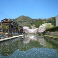 Photos: 八幡堀り