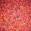 Photos: 紅葉じゅうたん