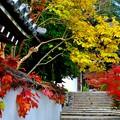 Photos: 秋色もようの山門