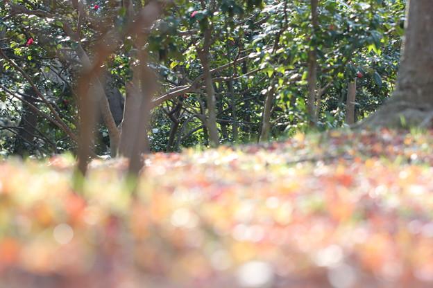 キラキラ落ち葉