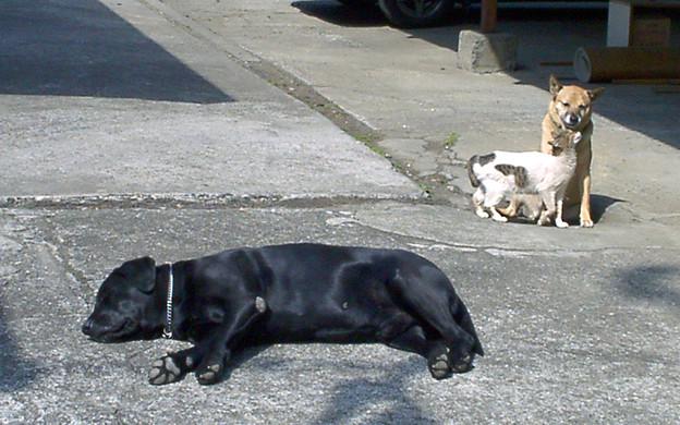 021a2_アンリとゴンと子猫(2)