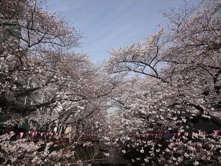 2014.3.29 目黒川の桜