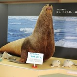 hirosuke2010