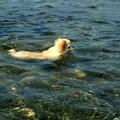 Photos: 泳げメロン
