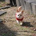 写真: 出動!!