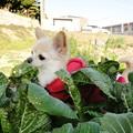 写真: 高菜の香りにつつまれて