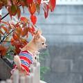 いつもの場所にも秋の気配
