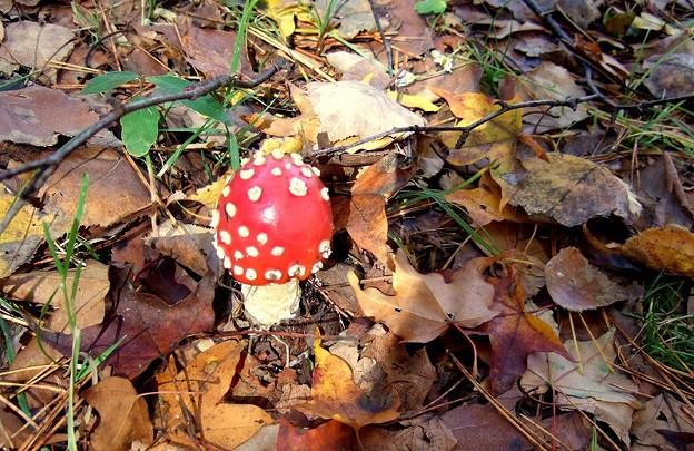 秋のキャンプ キノコ
