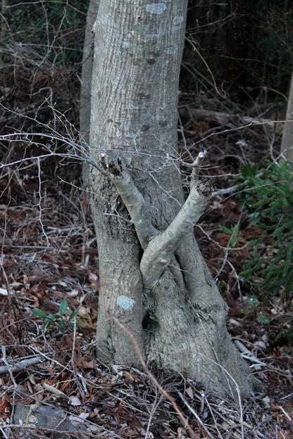 富幕山自然造形木