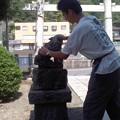 狛犬ごしごし(8月19日、塩釜神社)