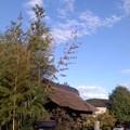 台風一過(10月16日、成福寺)
