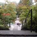 降魔橋(11月4日、円覚寺)