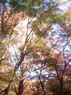 紅葉の錦2(11月30日、かまくら巡り)