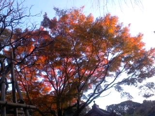 夕陽に燃える紅葉(11月30日、瑞泉寺)