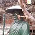 親鸞聖人と梅(1月15日、小袋谷成福寺)