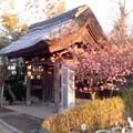 成福寺山門(3月8日、鎌倉市小袋谷)