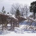 雪の翌日_公園 C08407