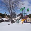 雪の翌日_公園 C08411