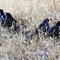 Photos: 5-CAの州鳥