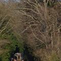 写真: 森へ続く径(みち)@ひたちなか海浜鉄道湊線 金上-中根 2014/03/15