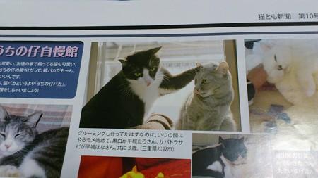 随分前のVol.10猫とも新聞