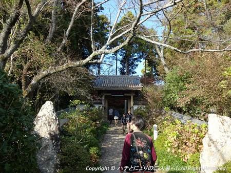 2012-11-24ミカン狩り (7)