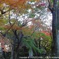 Photos: 2012-11-24ミカン狩り (9)