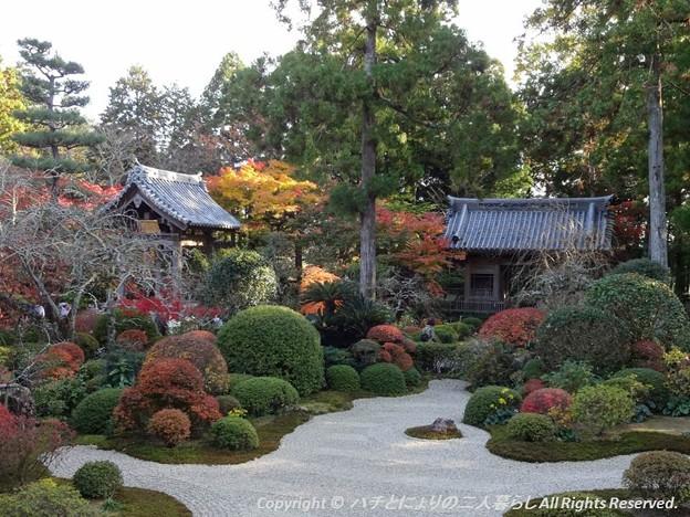 Photos: 2012-11-24ミカン狩り (10)