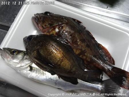 2012-12-21釣り1