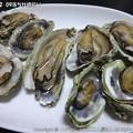 Photos: 2013-02-09落ち牡蠣拾い (7)