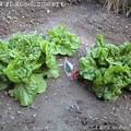 Photos: 2013-04-21久しぶりに農園の事でも (2)