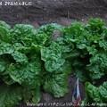 Photos: 2013-04-29苗植えました (7)