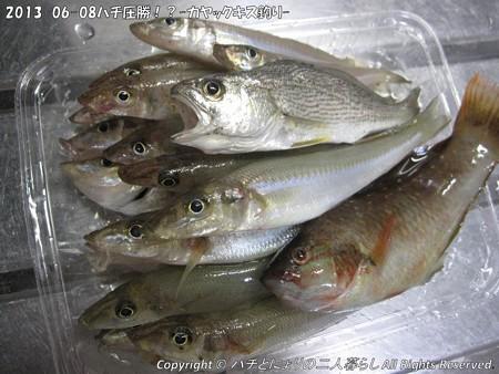 2013-06-08ハチ圧勝!?-カヤックキス釣り- (6)