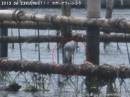 2013-06-23初青物GET!!-カヤックフィッシング- (6)