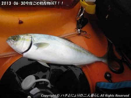 2013-06-30今度こそ初青物GET!! (5)