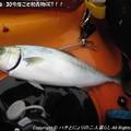 Photos: 2013-06-30今度こそ初青物GET!! (5)