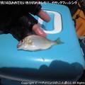 Photos: 2013年7月14日おめでたい魚が釣れました!-カヤックフィッシング- (4)