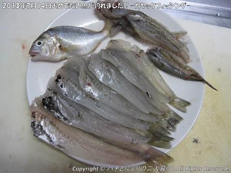 2013年7月14日おめでたい魚が釣れました!-カヤックフィッシング- (7)