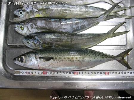 2013年8月12日意外と美味しいお魚でした♪ (2)