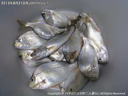 2013年8月31日先週のリベンジ! (13)