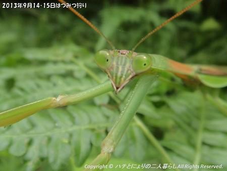 2013年9月14・15日はつみつ狩り (2)