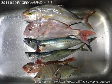 2013年10月13日釣れる予感・・・!? (1)