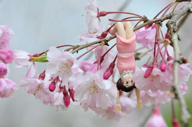 0406-花見のフチ子さん-03