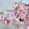 Photos: 0406-花見のフチ子さん-03