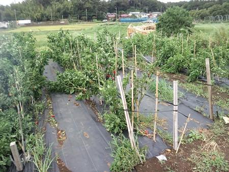 台風18号被害