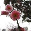 13.02.15.北野神社2(牛天神。文京区)