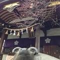 13.02.15.北野神社4(牛天神。文京区)