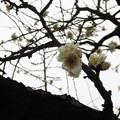 13.02.15.湯島天満宮3(湯島天神。文京区)