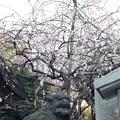13.02.26.北野神社(文京区)