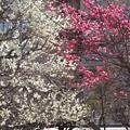 Photos: 13.02.26.湯島天満宮